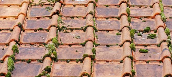 jak usunąć mech z dachu