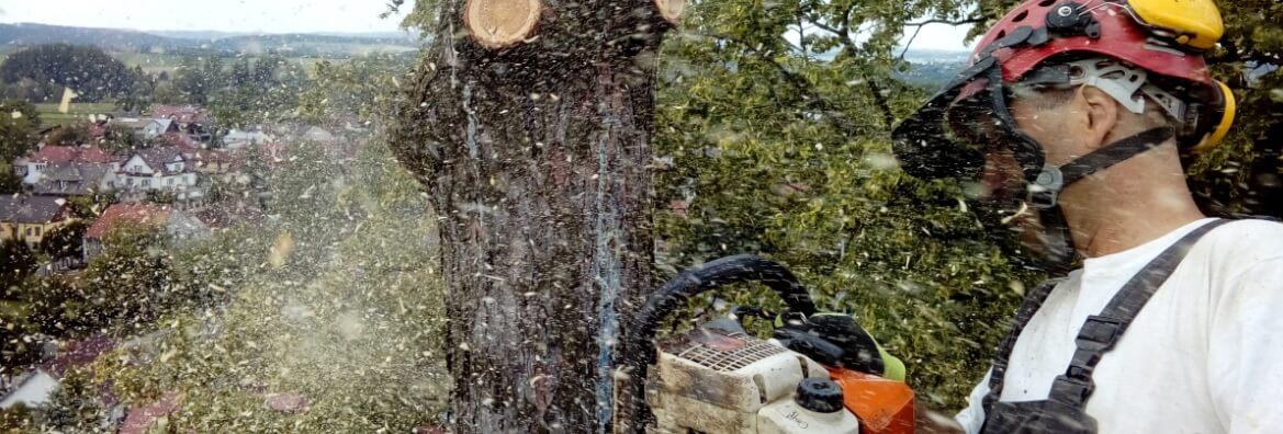 Wycinka drzew z podnośnika koszowego