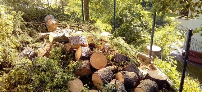 jak zrobić wycinkę drzew