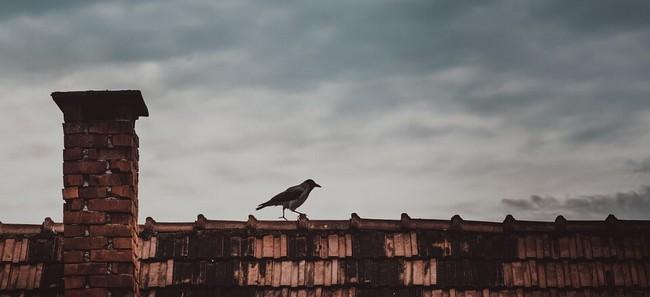 Przeciekający dach - co robić