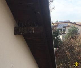System odstraszania ptakow
