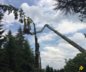 Wycinka drzew w Krakowie