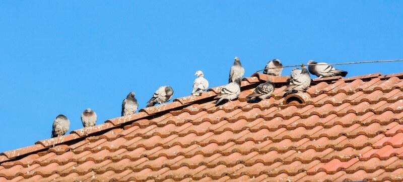 Stop ptaki Kraków