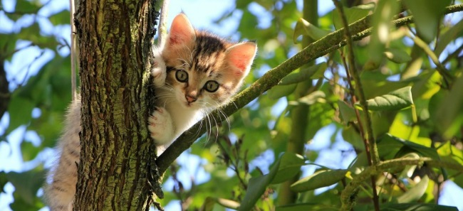 Podnośniki do zwierząt na drzewie